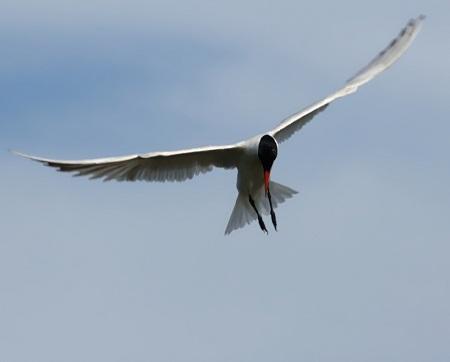 Tern Technique