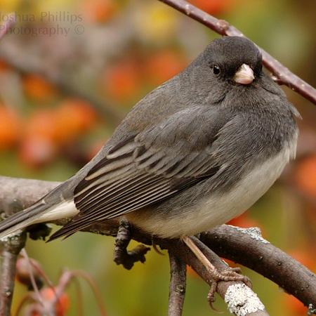 November Yard Birds