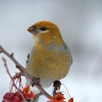 Winter Birds Bonanza!