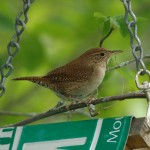 A House for Every Wren